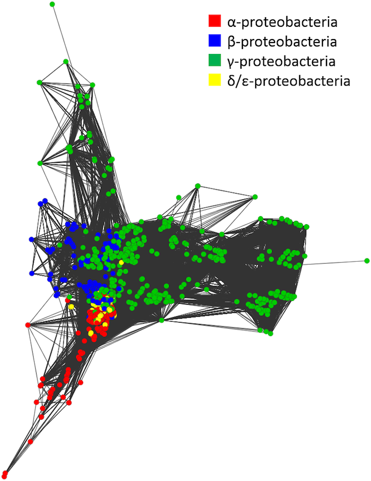 Network of 2,307 Proteobacterial bacteria.  The image shows the relationships of the different classes of bacteria within the phylum Proteobacteria.